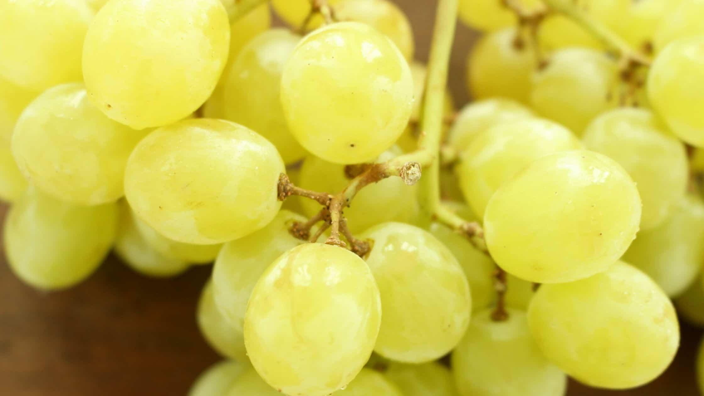 ¿Como se elabora el vino blanco?
